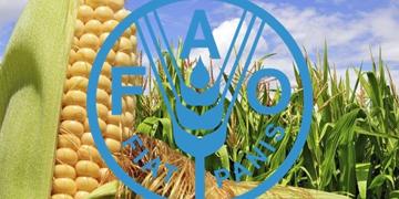 Organización de Naciones Unidas para la Alimentación y la Agricultura (FAO)