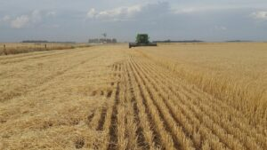 Agricultura Argentina campo