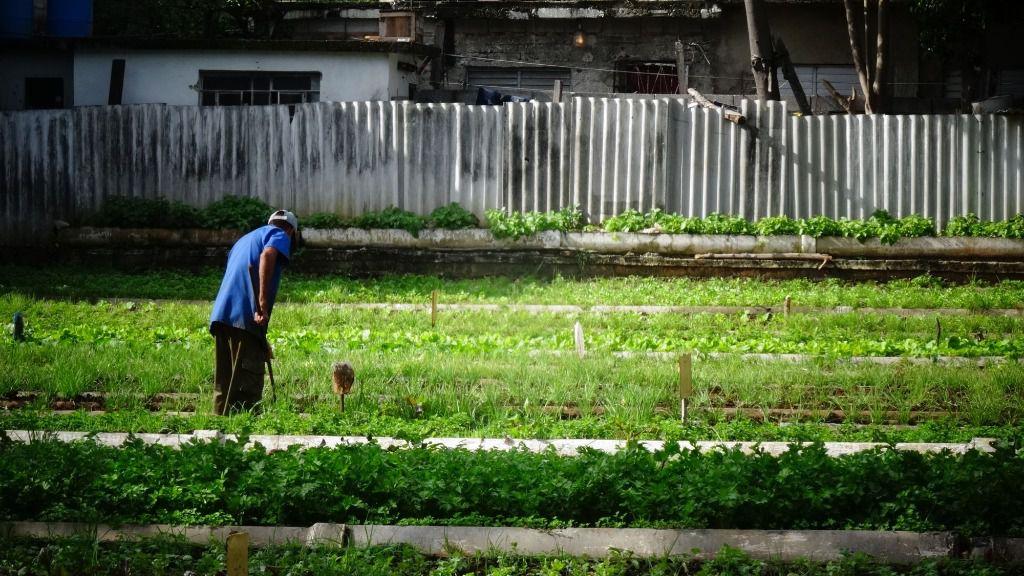 Agricultor campo Cuba Agricultura