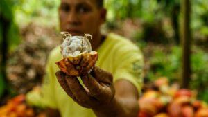 Un agricultor brasileño muestra un cacao en una plantación de Itajuipe, en el estado de Bahía, el 13 de diciembre de 2019