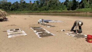 Paleontólogos secando sedimentos tamizados cerca del sitio fósil de Santa Rosa en el Perú amazónico