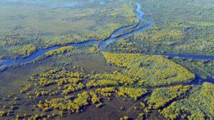 Pantanal brasileño