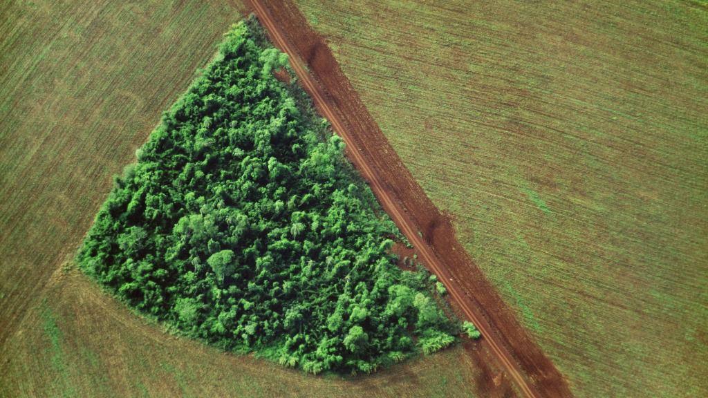 Brasil alcanza cifras récord de deforestación en 2020