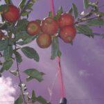 AGRALIA: la empresa con tecnología patentada para los cultivos que tiene presencia a nivel internacional