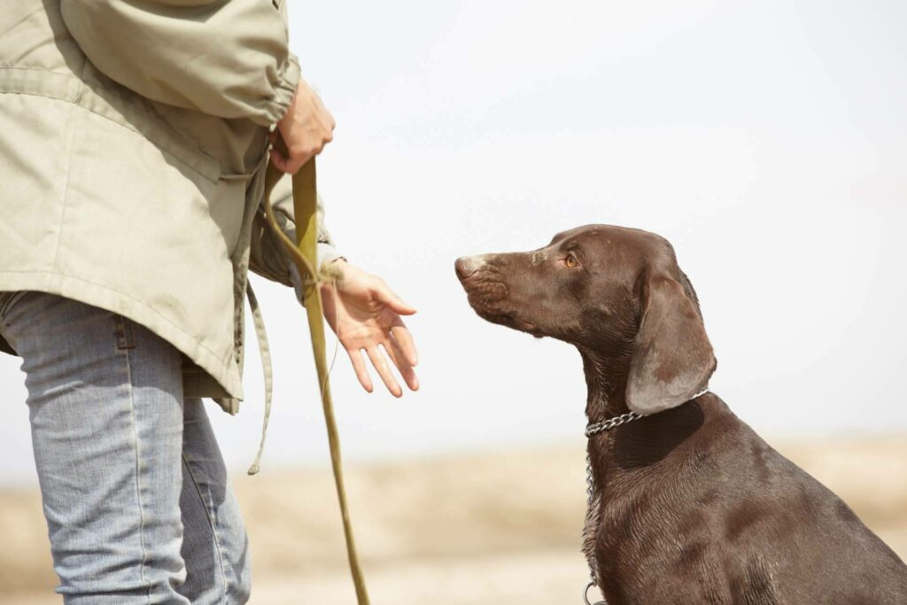 Wolves Legacy ofrece cursos certificados gratuitos de nutrición, psicología y adiestramiento caninos