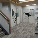 Clínica veterinaria Irún con servicio de urgencias 24 horas: Amaita Mascota