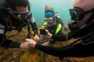 Extracción de muestras de sedimento de los arrecifes de coral del Caribe para averiguar los efectos que han tenido en ellos la actividad humana históricamente. - SEAN MATTSON (STRI)