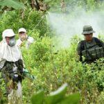 Archivo - Imagen de archivo de una plantación de coca en Colombia - POLICÍA NACIONAL DE LOS COLOMBIANOS - Archivo