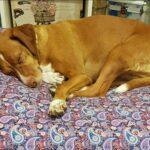 Las camas para mascotas de Patitas Barcelona