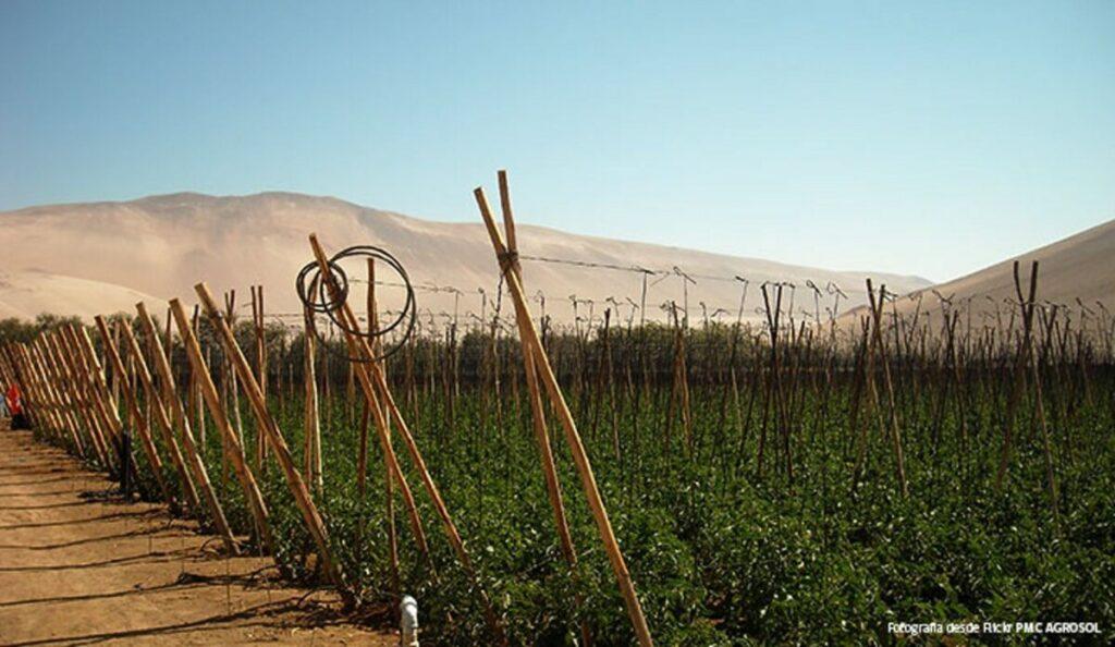 Región agrícola chilena - PRESIDENICA DE CHILE