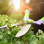 Las herramientas de jardín para eliminar las malas hierbas disponibles en el amplio catálogo de Modrego Hogar